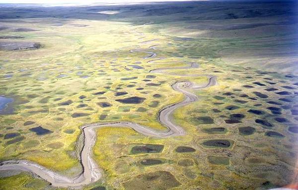 Yamal tundra