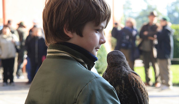 A child with his falcon.