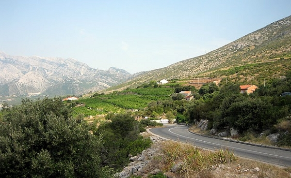 Pelješac Peninsula vineyards