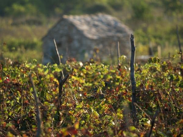 Croatian wine production