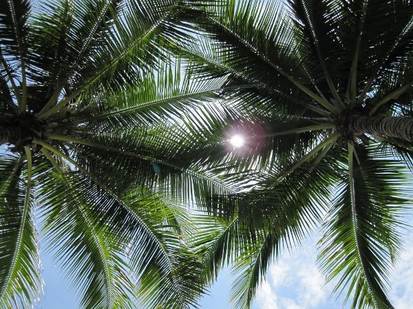 Desaru Resort sky view