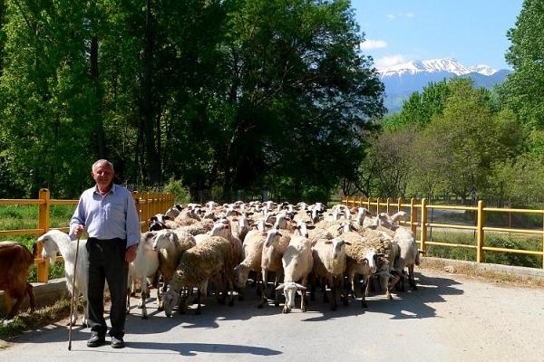 Modern day Greek shepherd near Dion
