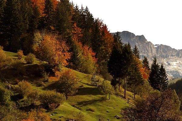 The Carpathian garden.