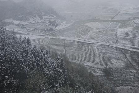 Vietnam snow, aerial view.