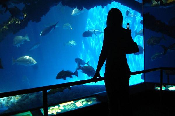 The magic of Texas State Aquarium