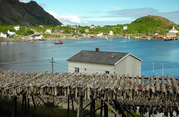 Drying Cod in Norway