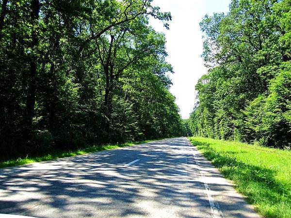 Road to Paltinis