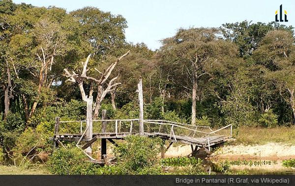 Bridge in Pantanal