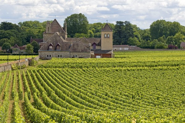 Vineyard in Bourgogne, cote de Nuits