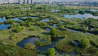 Văcărești Becomes the First Urban Natural Park in Romania