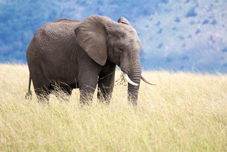 Elephant In The Long Grass - Stuart Richards