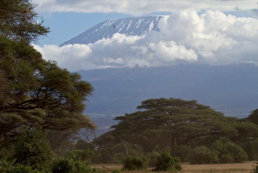 Kenya - by ollografik
