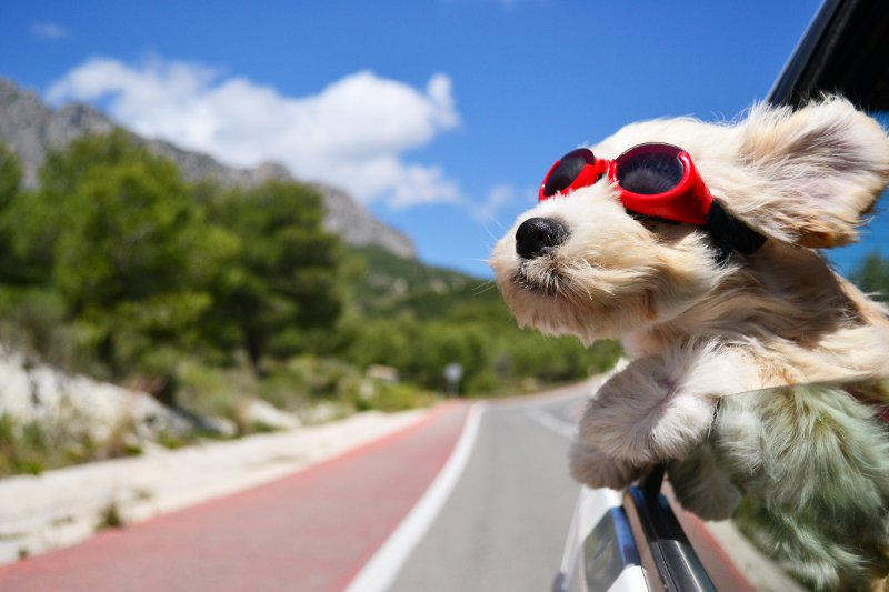 The happy travel blogger by © Natallia Vintsik - Fotolia