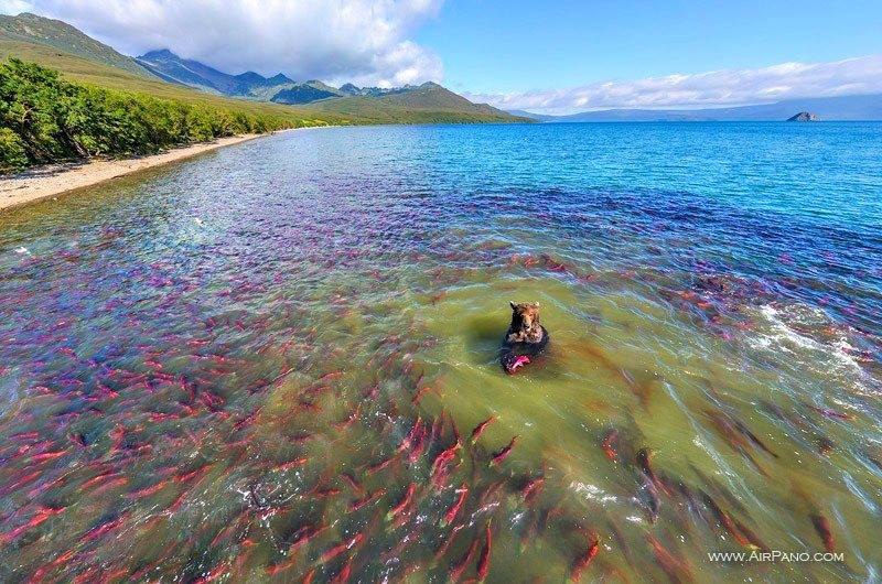 Salmon for lunch anyone? smile emoticon Kurile lake in Kamchatka by AirPano.