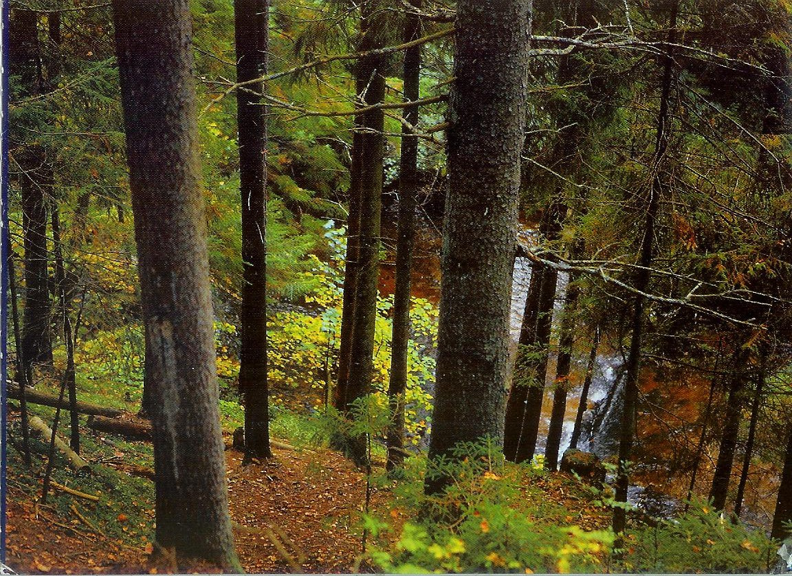 Forest in Narochansky