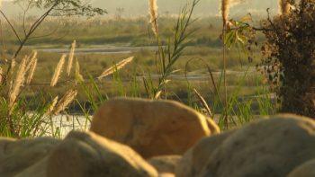 Buxa's lowland watering areas