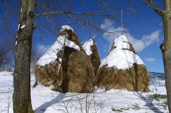 Picturesque snapshot from the Pestera village in Piatra Craiului.
