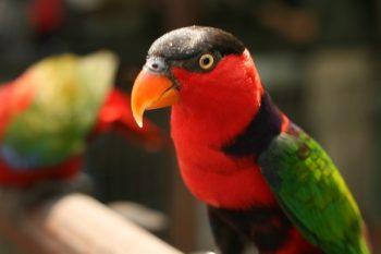 Jurong Bird Park inmate