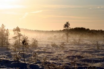 Estonian eco-tourism has huge potential according to tourism experts