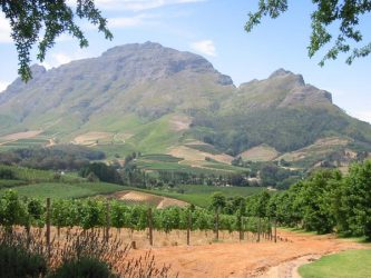 Explore South Africa's famous wine routes