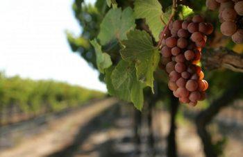 Monterey Wines