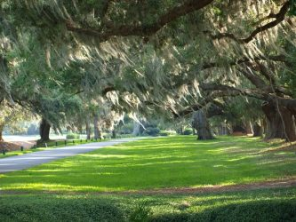 Avenue of Oaks at Sea Island