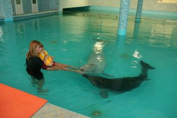 Dolphins in the pool with kids