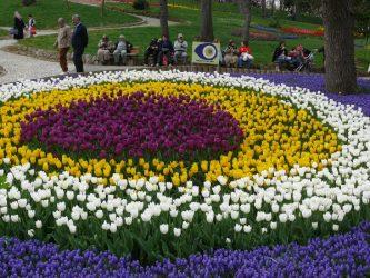 Tulips at Emirgen Park