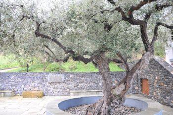 Maleme tree