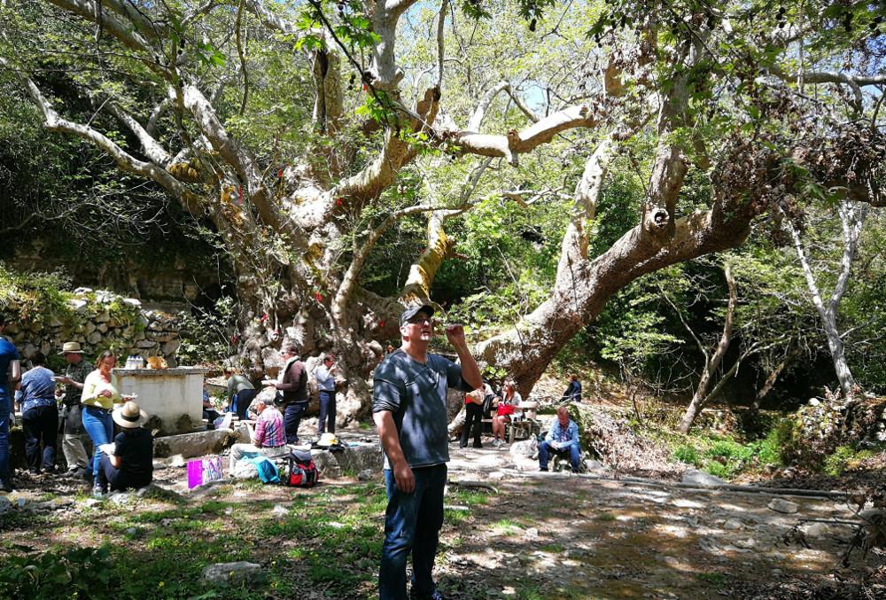 Avatar Tree Argyroupoli
