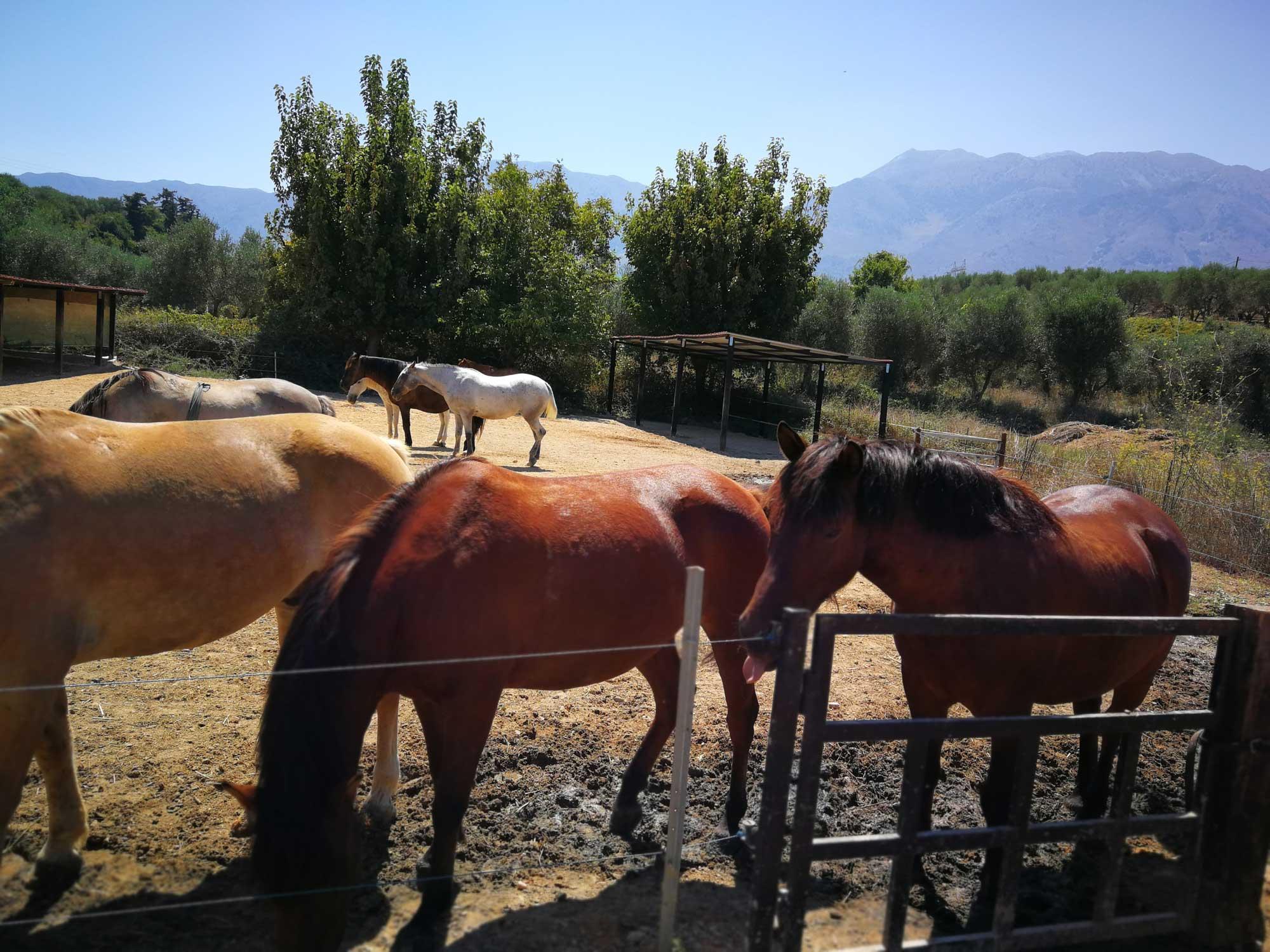 Zoraïda's Horse Riding