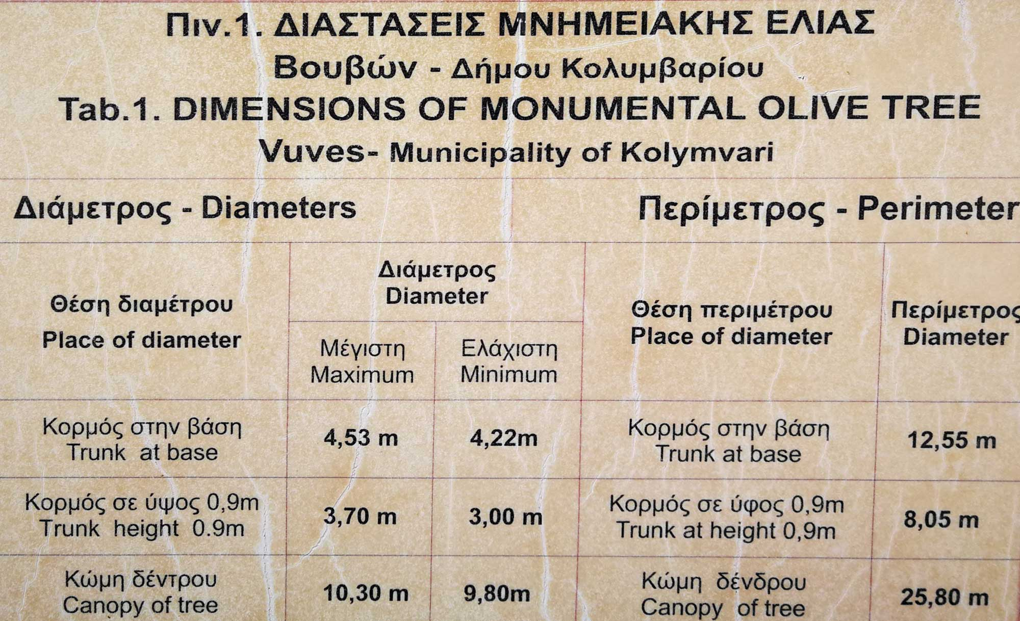 Dimensions of the Monumental Olive Tree of Vouves.