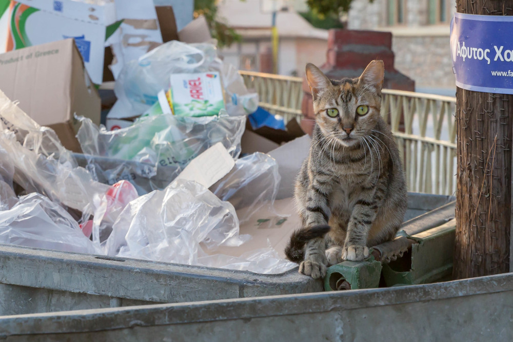 Afitos dumpster cat