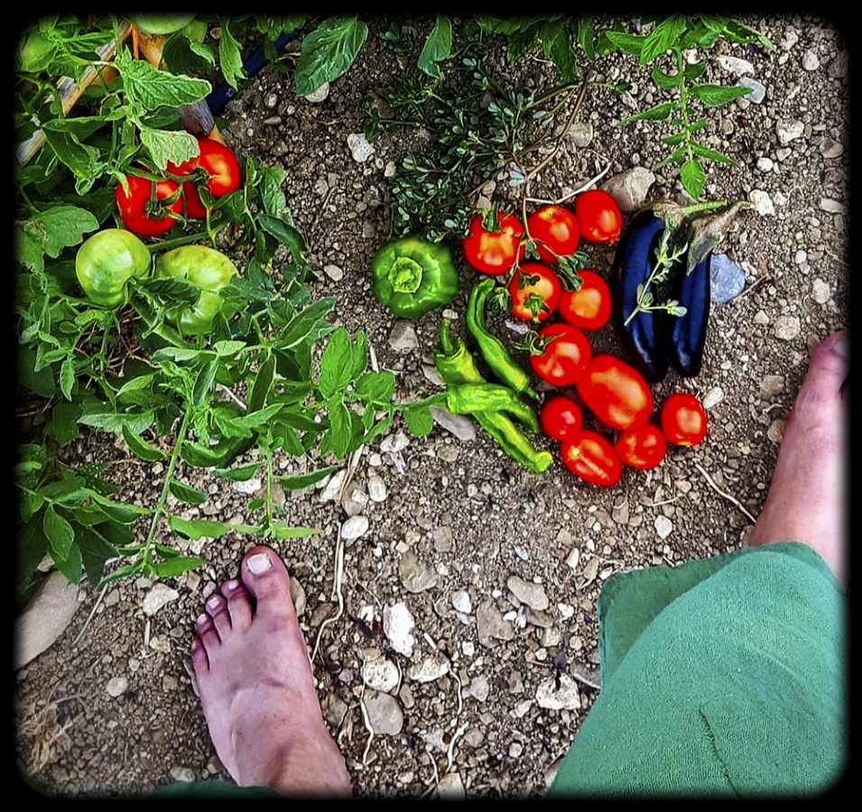 Spiros Liasitis gardening in Ano Asites