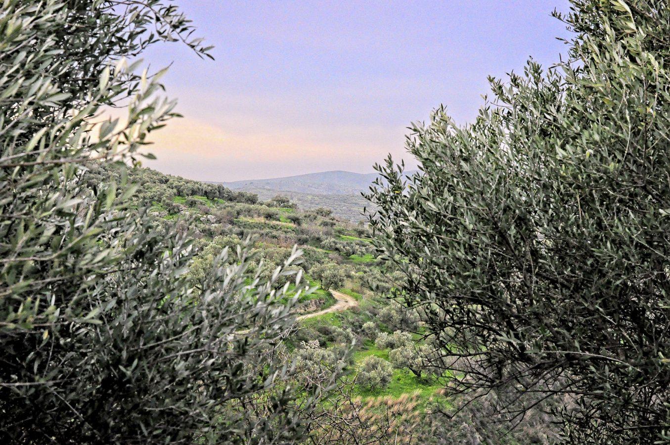 Galatas landscapes