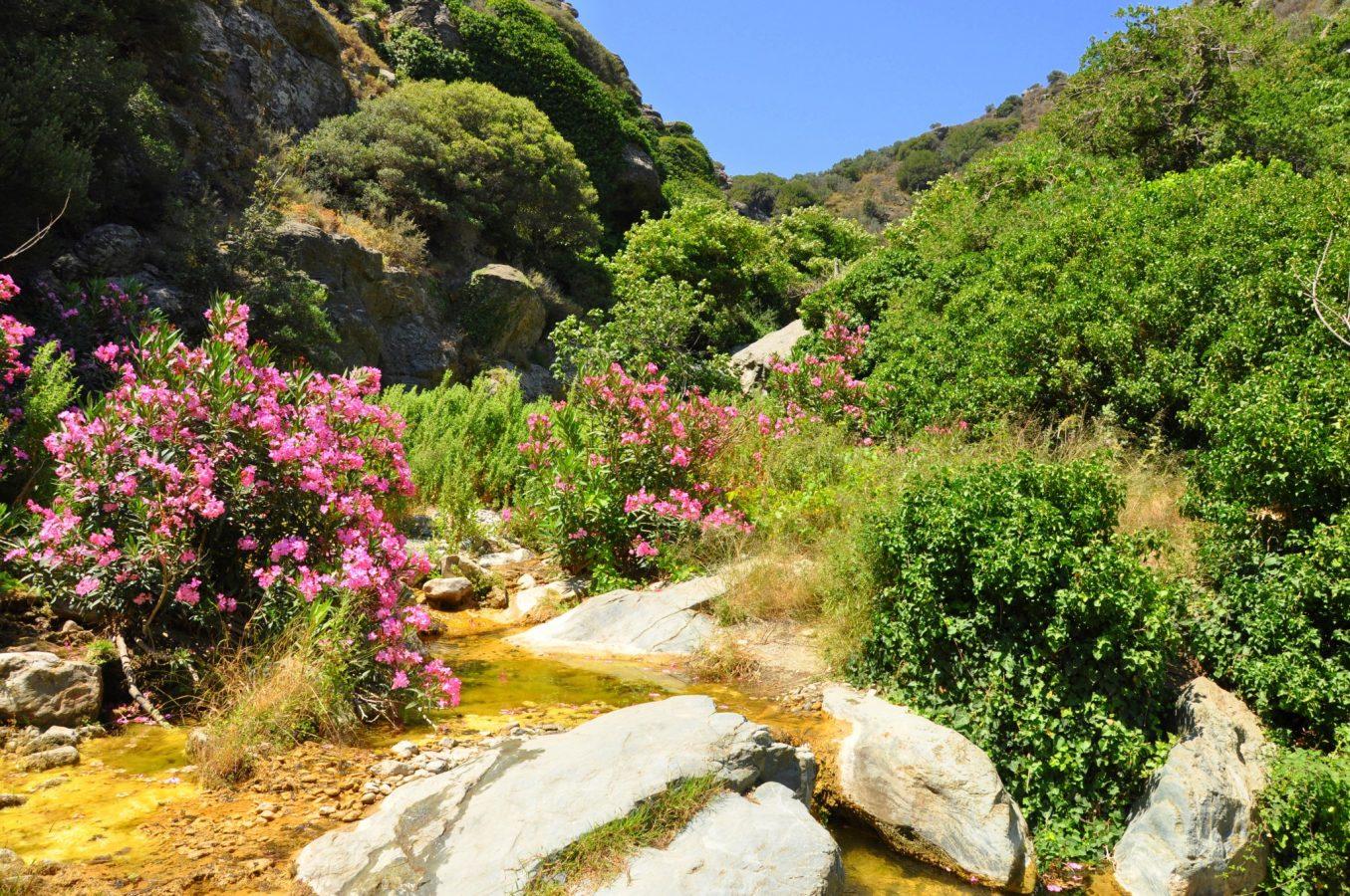 Richtis trail