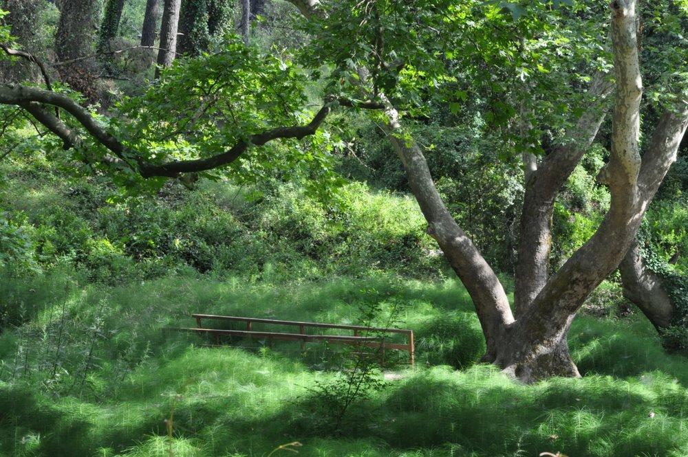 King's Forest at the Tatoi Estate - Photo by Jola i Dimitris
